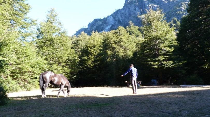 huerquehue chevaux camping pucon