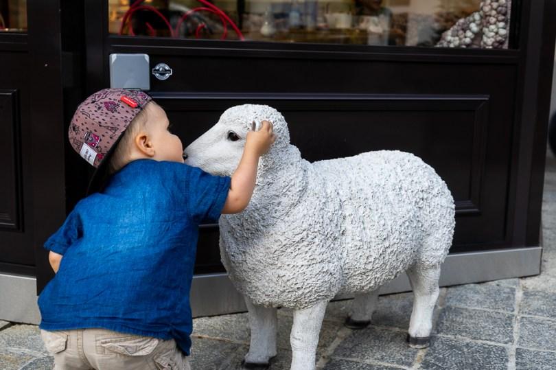 saint gervais les bains mouton