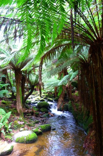 road trip tasmanie st columba forest