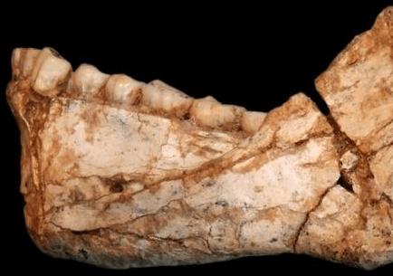 El fósil más antiguo de la humanidad