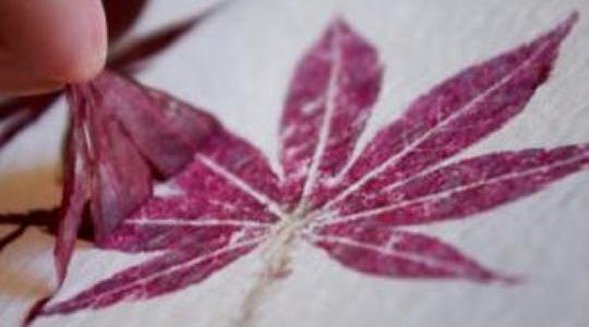 Como fazer carimbos com folhas