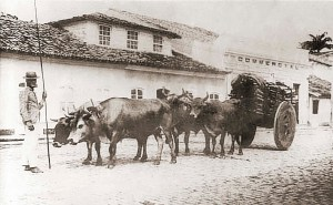 Carro de boi transitando pela Rua do Comércio no início do século XX