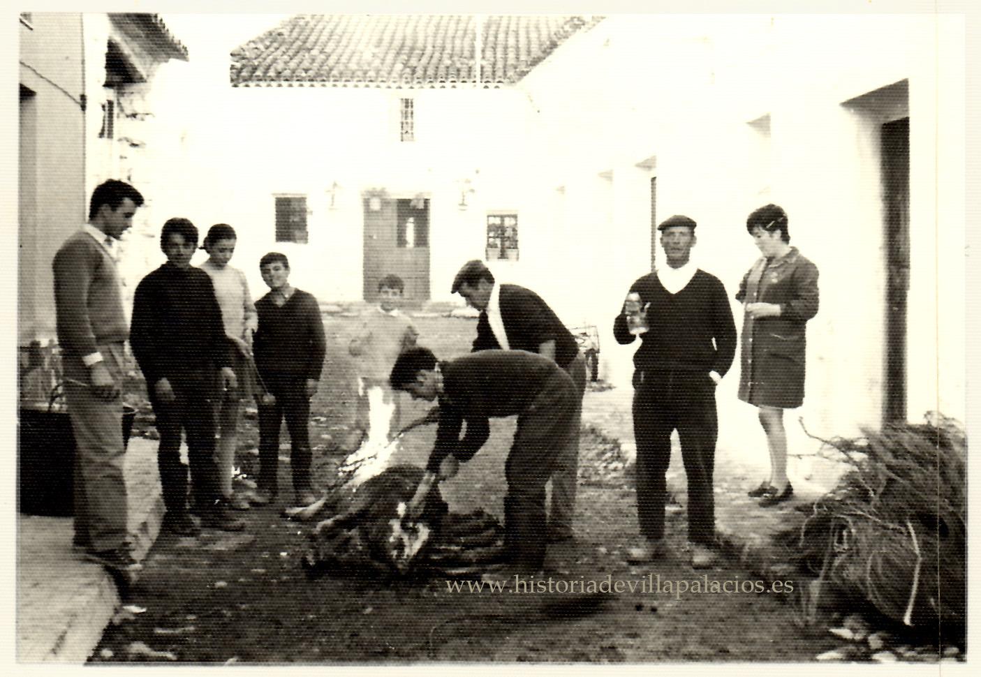 Resultado de imagen de matanza de cerdos