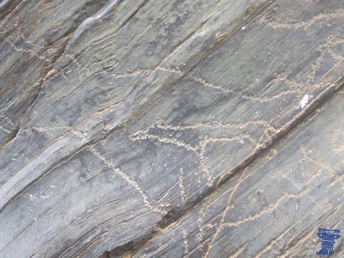 Representación rupestre del yacimiento de Siega Verde, del paleolítico superior