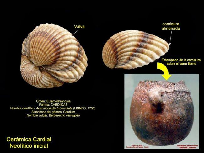 Esquema acerca de las piezas de la cerámica neolítica cardial