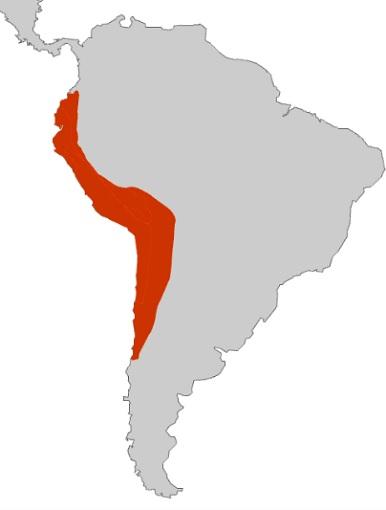 Mapa de la extensión máxima del Imperio Inca antes de la conquista española de América