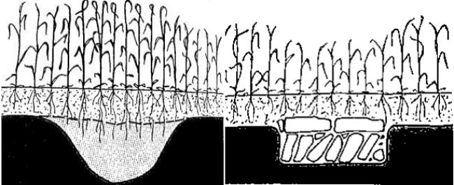 Crecimiento de la vegetación según el tipo de terreno