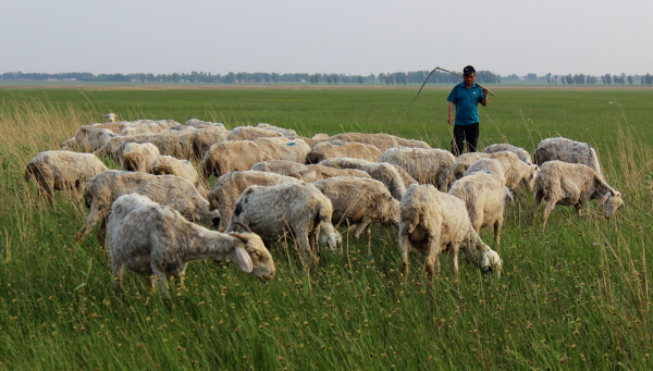 pastor-chino-1