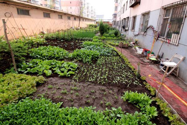 jardin-huerta-changchun-1