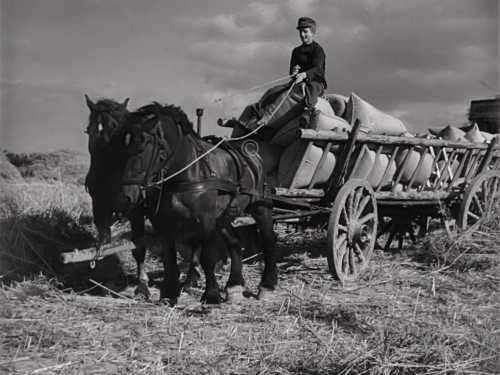 Pferdefuhrwerk 1945
