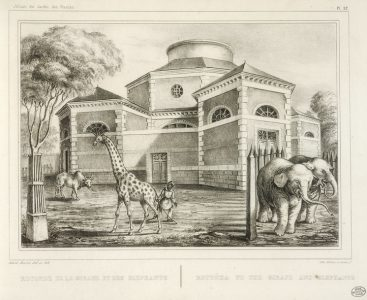 Rotonde met giraf en olifanten menagerie du jardin des plantes