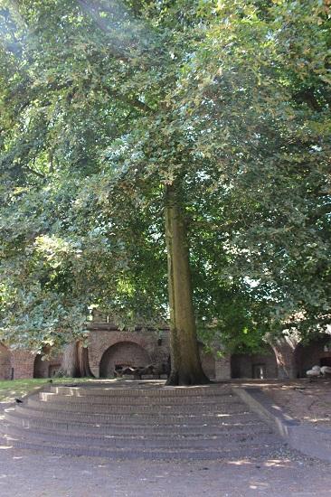 Gorgeous big tree
