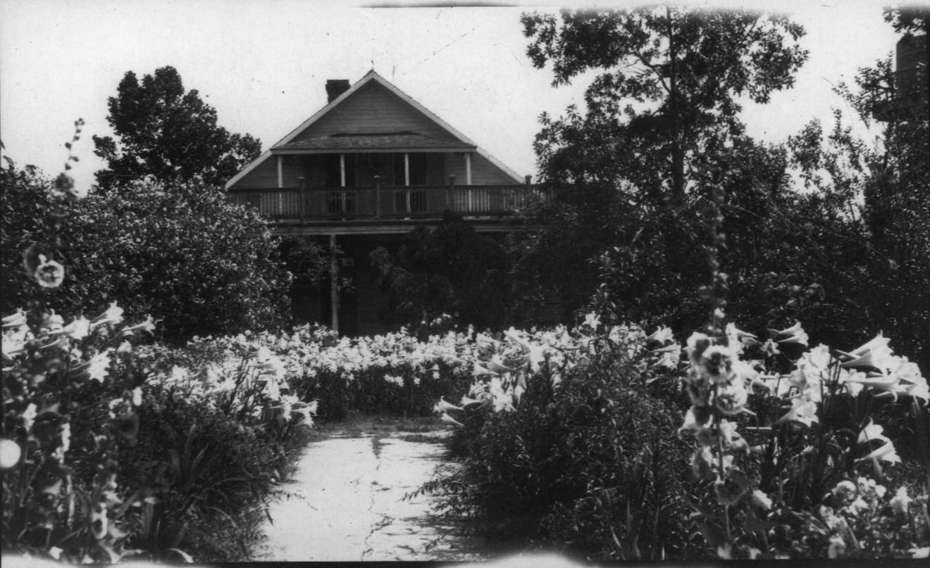 Alice Plantation