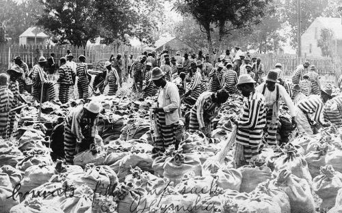 Convicts Fill Sandbags