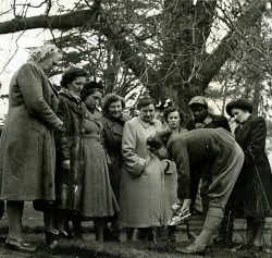 a group of women watching a pruning demonstration by the womens institute in 1964