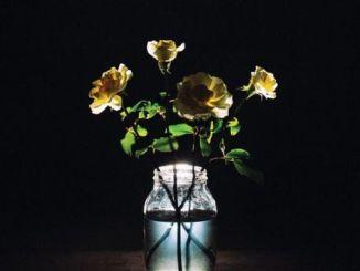 Billy Strings – Renewal ALBUM