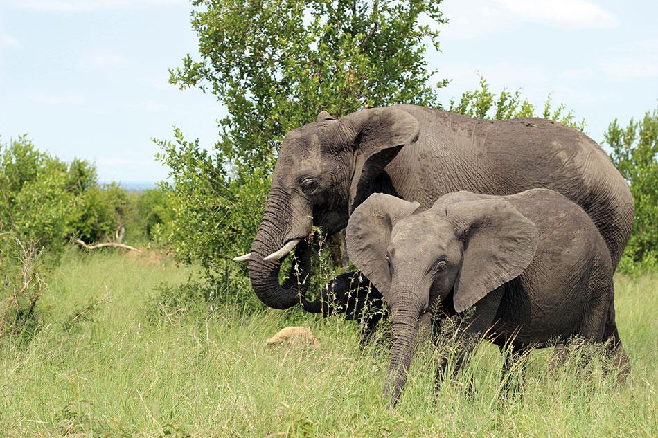 Pour voyager de manière raisonnée, dites non aux activités allant à l'encontre de vos valeurs comme la balade à dos d'éléphant.