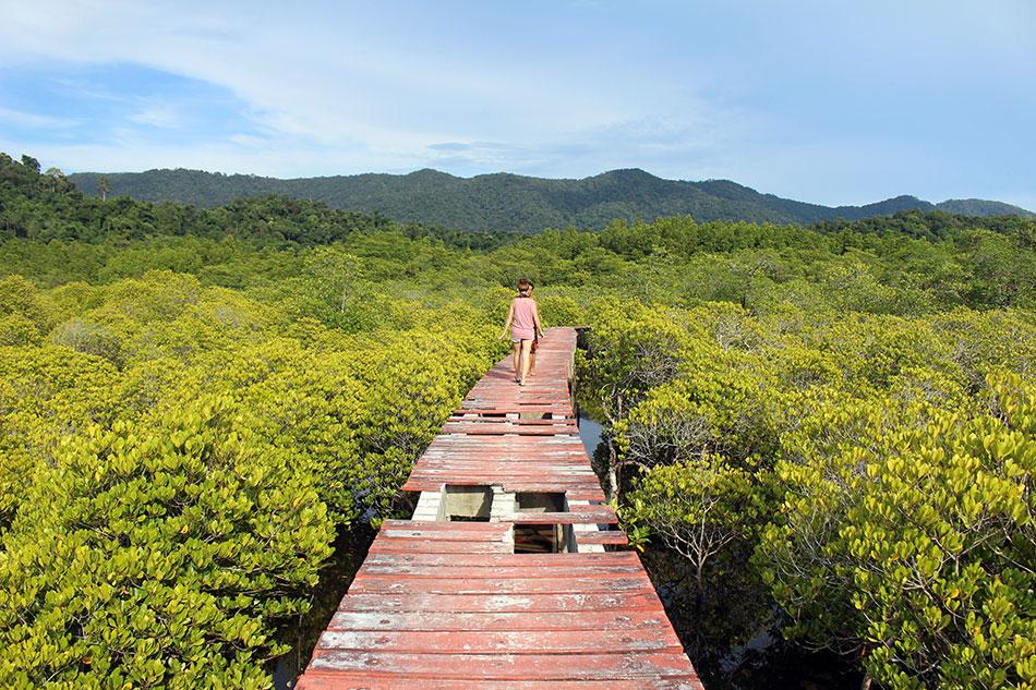 Passerelle au dessus de la mangrove dans le sud-est de l'île de Koh Chand dans la province de Trat en Thaïlande.