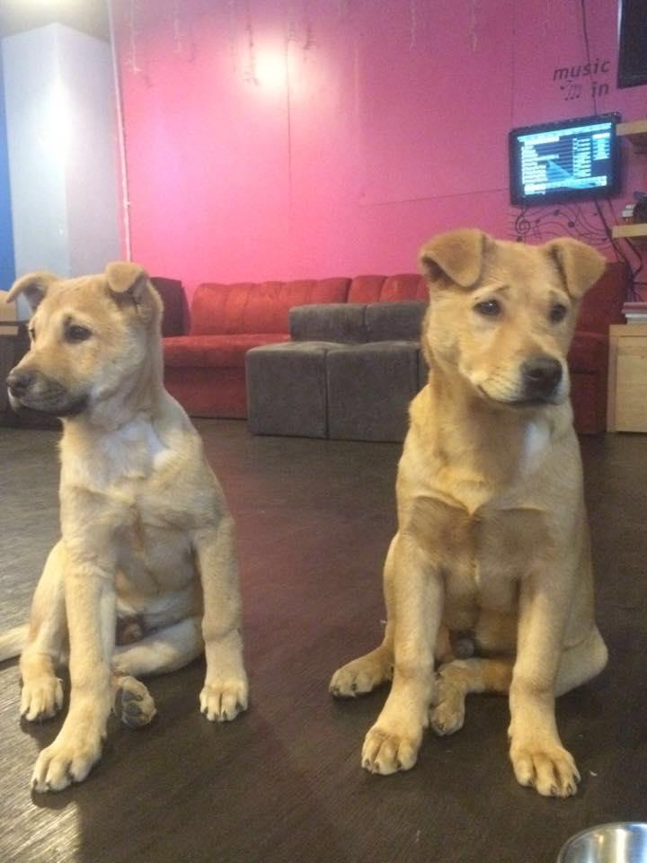 被踢小狗名為「Many」 義工感慨很多虐待個案不了了之 | 香港動物報 Hong Kong Animal Post