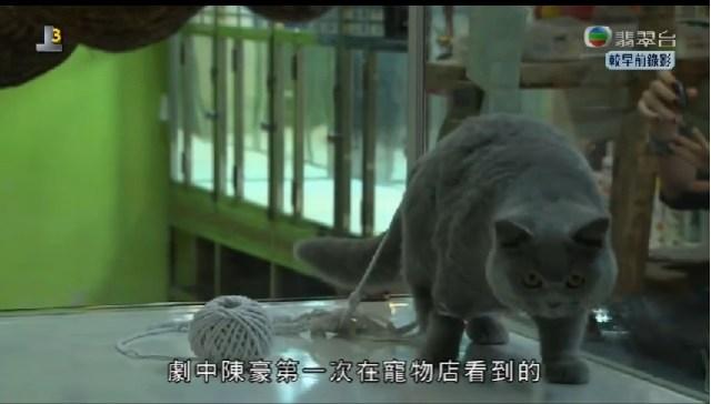劇中陳豪到寵物店的場景。