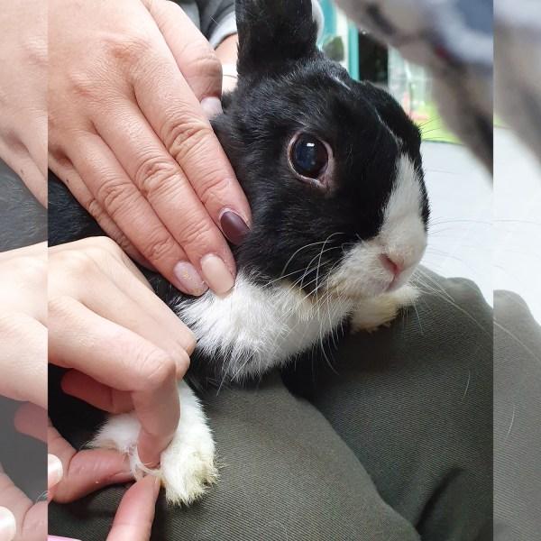 兔公館剪甲服務