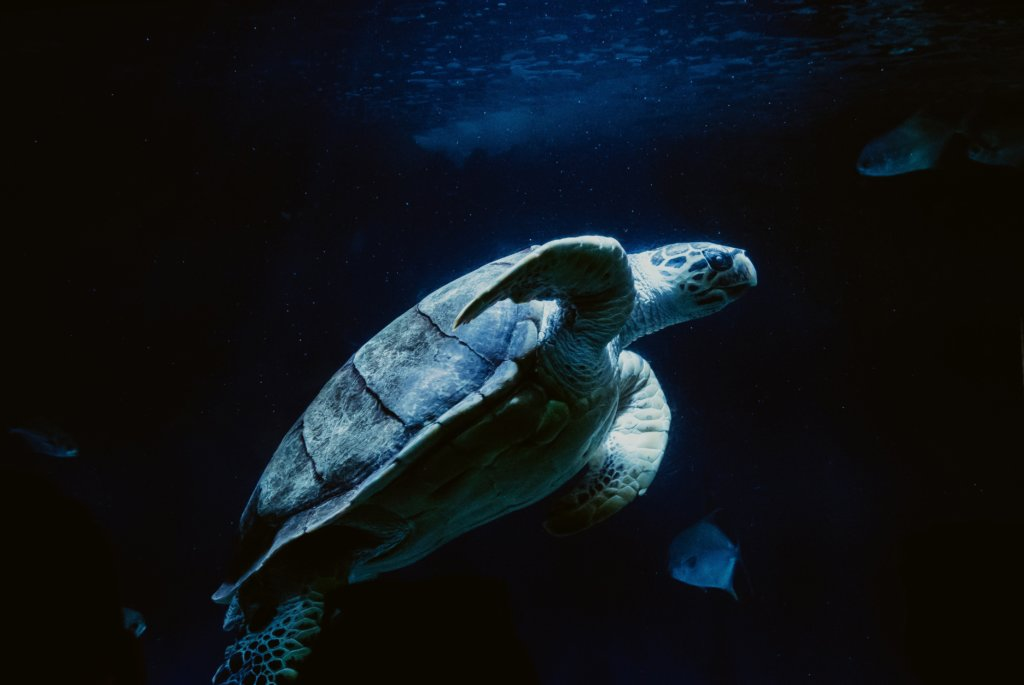 fwc turtle friendly lines hk usa