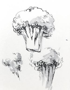 broccoli_drawing_300x383