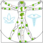 Endocannabinoid System Explained: What is ECS and What Is Its Role?