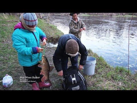 Hmong Sucker Fishing / Hmoob Nuv Ntses @ Rib Falls