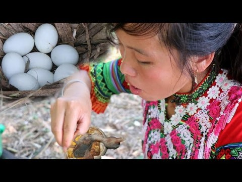 Survival Skills Hmong -  Find natural food to meet chicken eggs and boil them to eat kittens