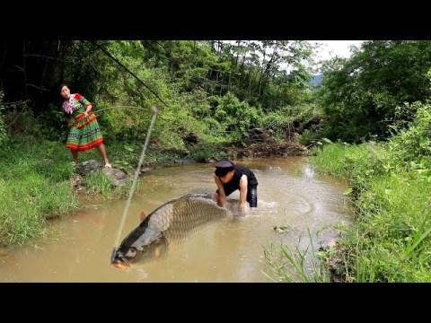 survival skills hmong  Primitive life Unique fishing by primitive trap catch fish - eating delicious