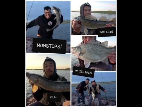 South Dakota Shore Fishing Frenzy! White Bass-Walleye-Pike 4 shots! Hmong Coj Nej Mus Nuv Ntses 2020