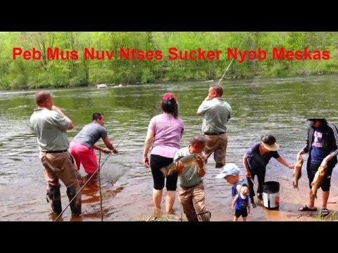 Hmong Sucker Fishing/mus nuv ntses Sucker nyob mekas
