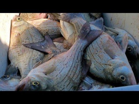 Hmong South Dakota  fishing 2020