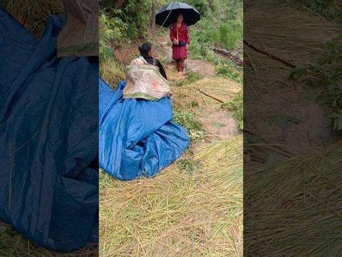 Hmong nyab laj txoj kev khwv noj - hauj nyob toj siab