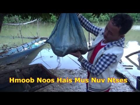 Hmoob Noos Hais Mus Nuv Ntses Tau ntau Kawg Nkaus... 23.7.2020