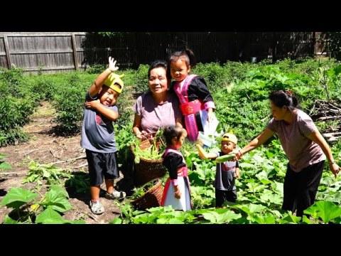 Hmong American Garden/Hmoob meskas De Ntsis Taub Thiab De Dib