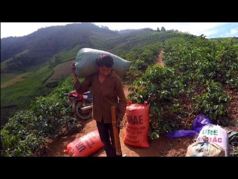 Vợ Chồng Bác Hmong Ngủ Trên Nương 14 ngày   lên đồi hái cà phê   tập 1
