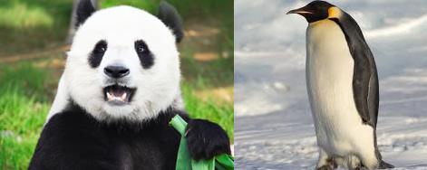 Panda or Penguin Update