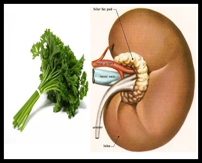Picture about Clean Your Kidneys with Less than Rs. 2