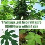 Picture: Papaya Leaf Juice will Cure Dengue Fever
