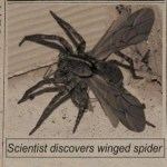 Picture about Scientist Discovers Winged Spider