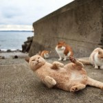 Picture of Tashirojima, the Cats Island in Japan
