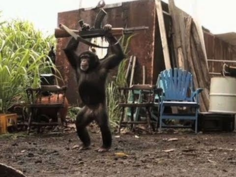 Picture: Video of Chimp with AK 47 Firing at Soldiers