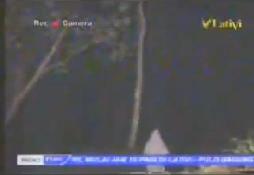 Picture about Flying Genie Caught on Camera in the Forest of Java, Indonesia