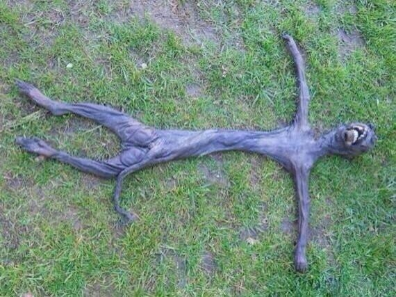 Picture about Alien Corpse Found in South Africa