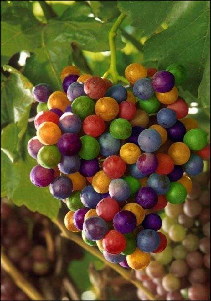 Pictures Showing Rainbow Grapes: Facts - Hoax Or Fact