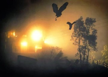 Picture about Mysterious Phenomenon, Jatinga Bird Suicide