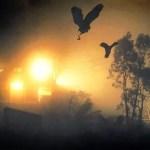 Picture about Mysterious Phenomenon, Jatinga Bird Suicide