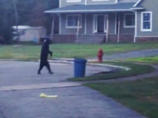 Picture from Bear Walks Upright Like a Human, Video